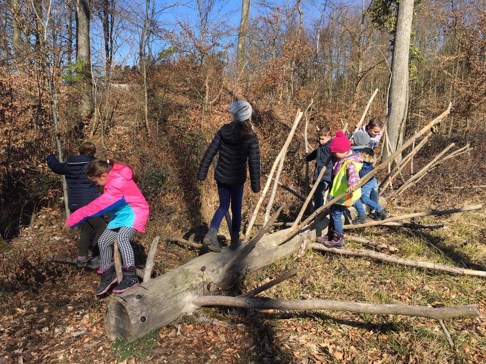 Wir lassen Bäume wachsen
